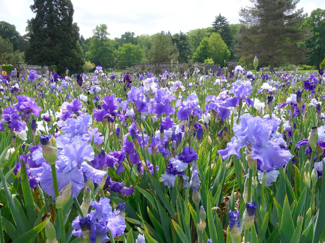 Jardin d 39 iris parc floral de la source for Aubade jardin d iris