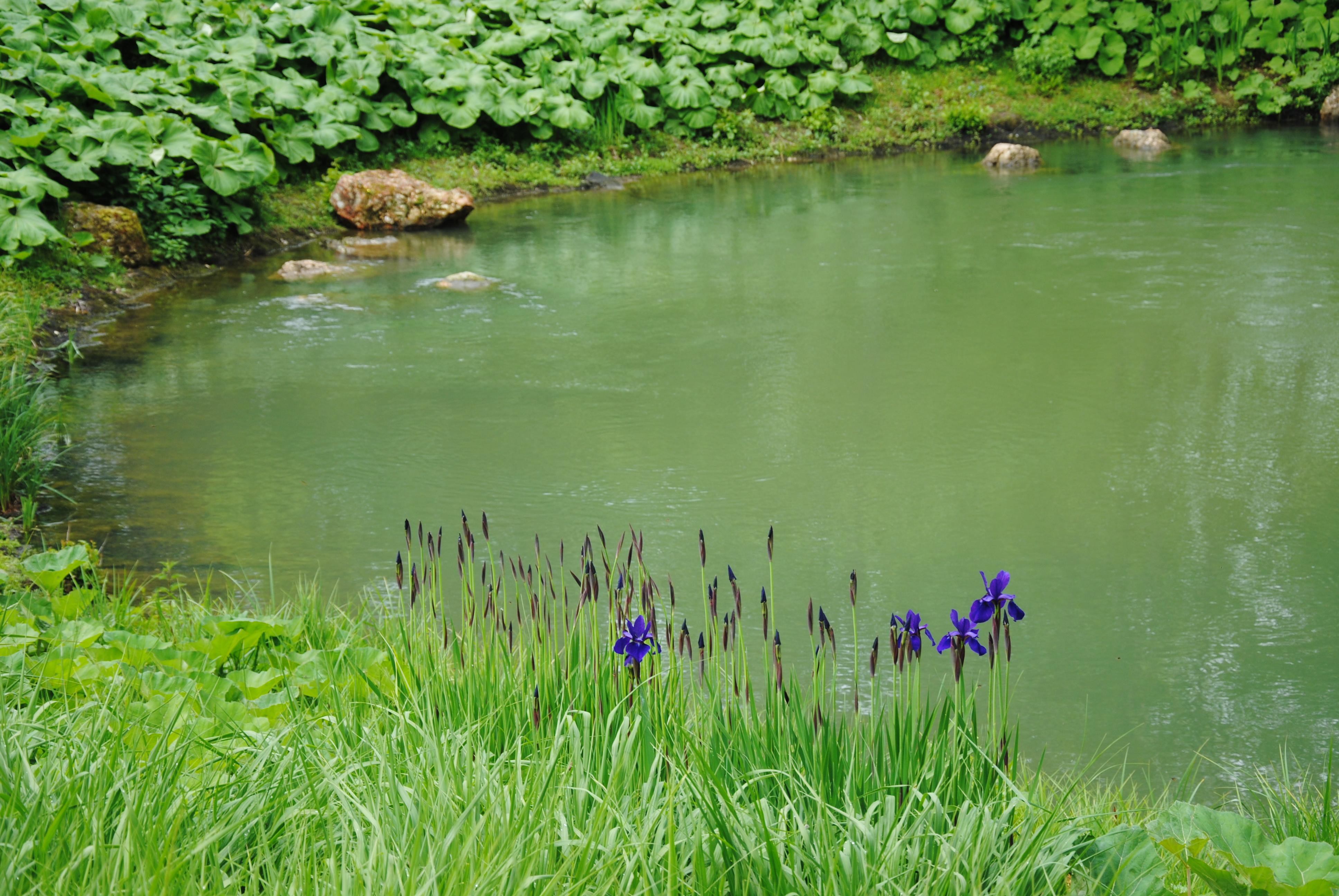 La source du Loiret