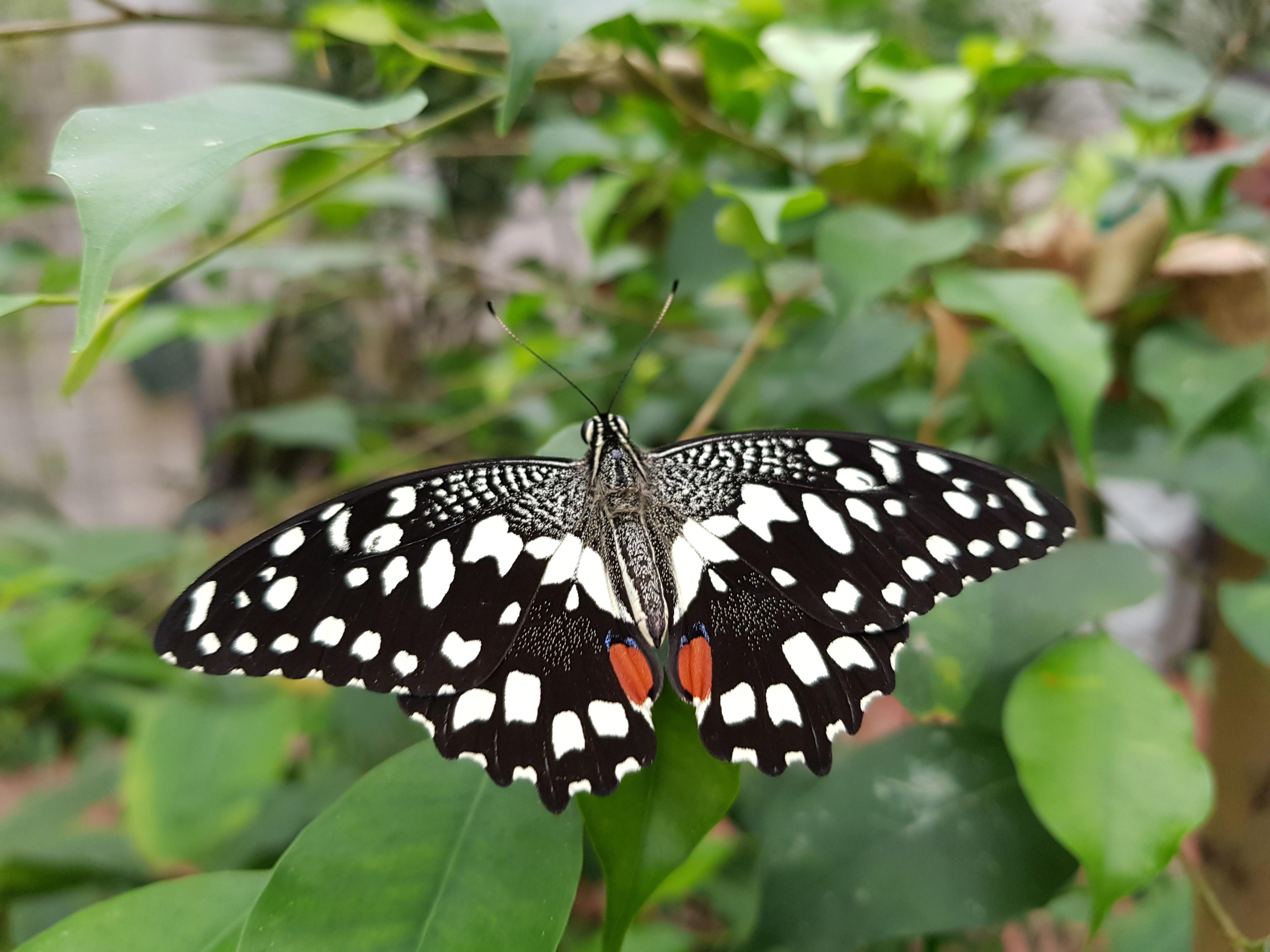 Réouverture la serre aux papillons 1